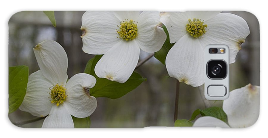 Flower Galaxy S8 Case featuring the photograph Season Of Dogwood by Andrei Shliakhau