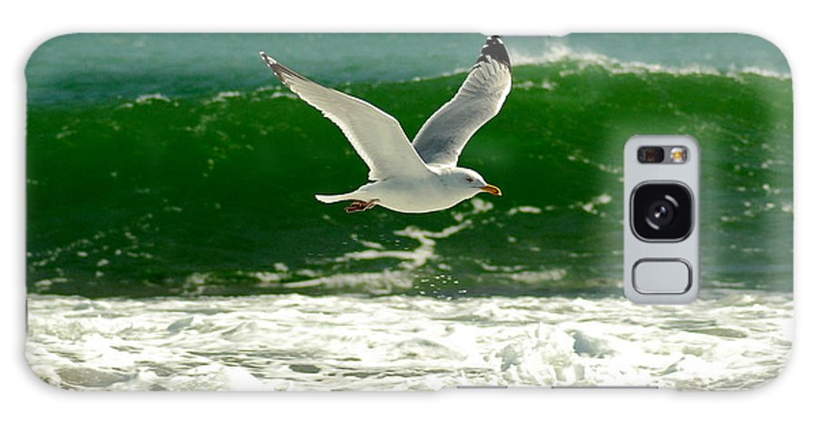 Sea Gull Galaxy S8 Case featuring the photograph See Gull by Greg Fortier
