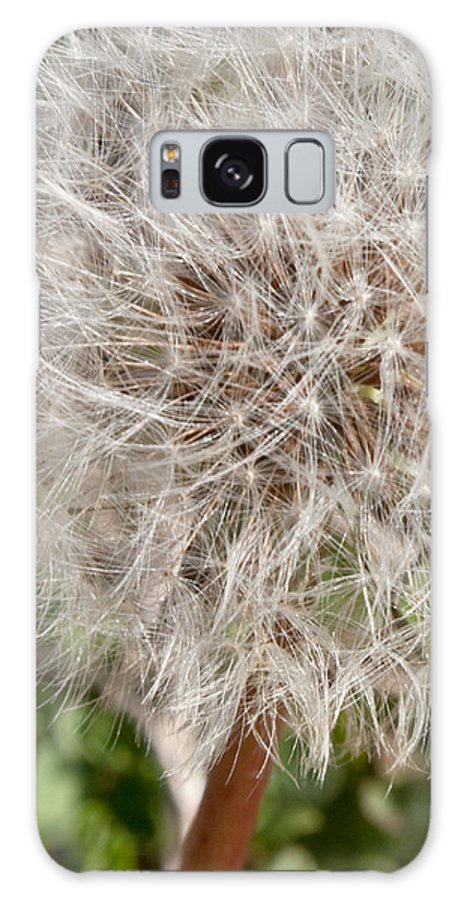 Flower Galaxy S8 Case featuring the photograph Seedlings by Hannah Breidenbach