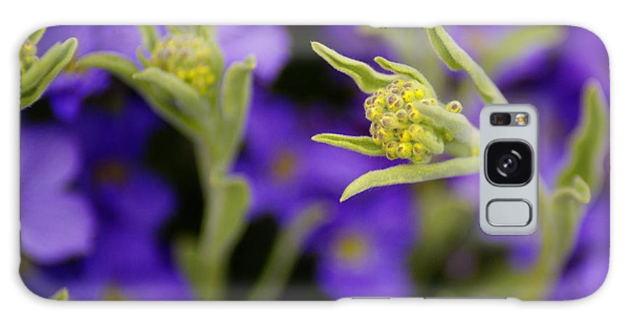 Flowers Galaxy S8 Case featuring the photograph Seeking The Day's Energy by Ben Upham III
