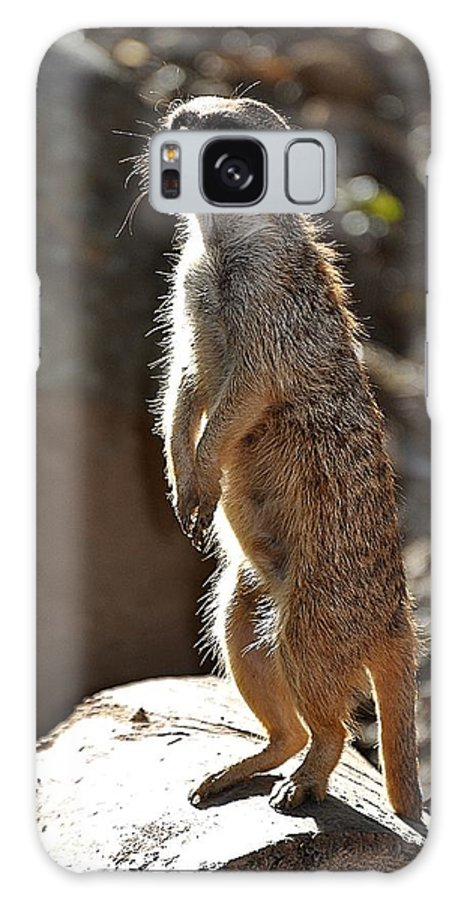 Animals Galaxy S8 Case featuring the photograph Sentry by Jan Amiss Photography