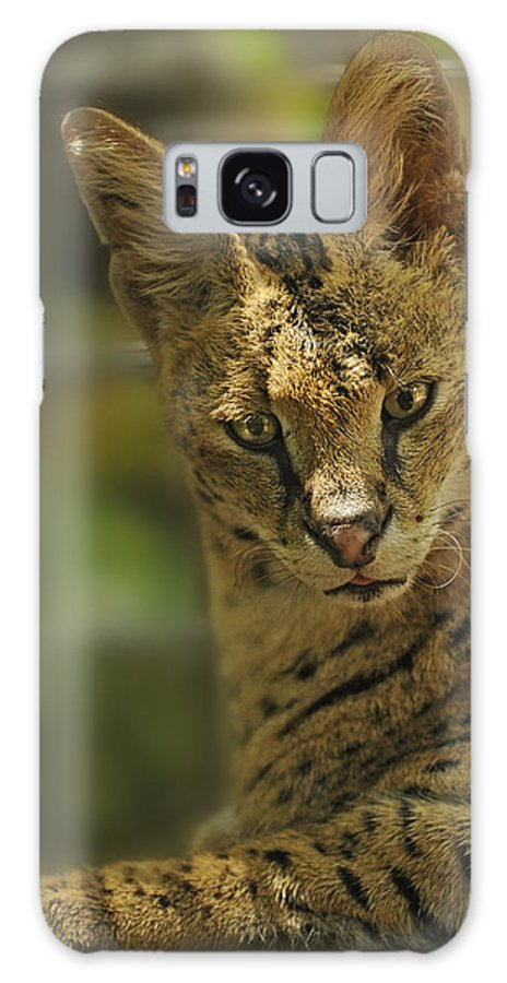 Cat Galaxy S8 Case featuring the photograph Serval by Keith Lovejoy