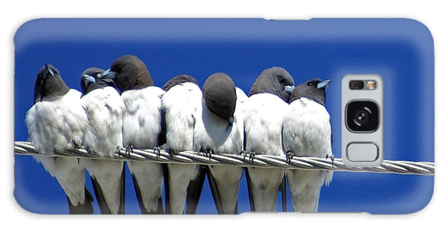 Animals Galaxy S8 Case featuring the photograph Seven Swallows Sitting by Holly Kempe