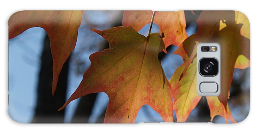 Leaf Galaxy S8 Case featuring the photograph Shadowy Sugar Maple Leaves In Autumn by Anna Lisa Yoder