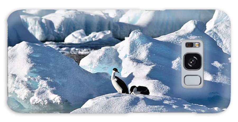 Antarctic Galaxy S8 Case featuring the photograph Shag On Ice by Chris Hanlon