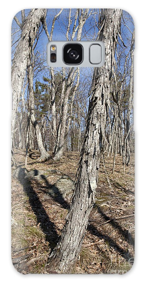 Forest Galaxy S8 Case featuring the photograph Shagbark Hickory Forest by Erin Paul Donovan