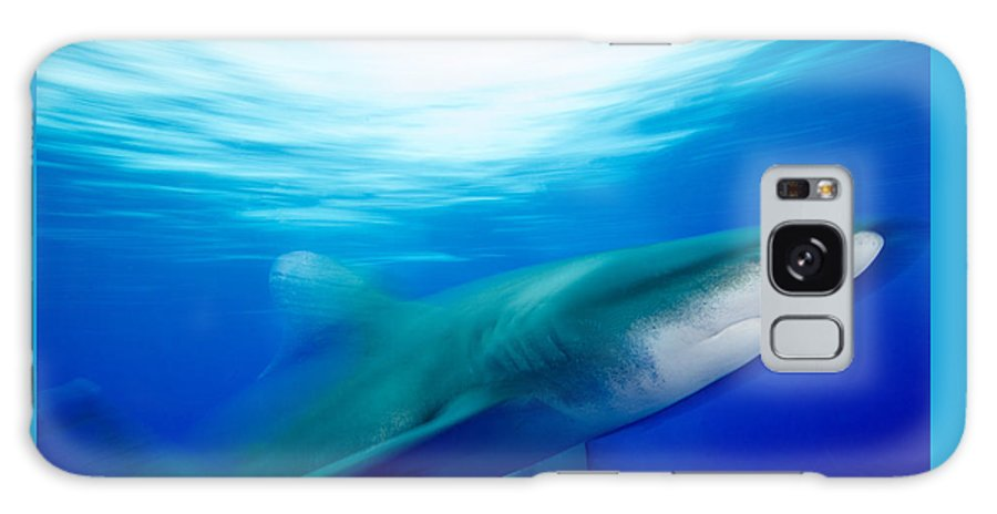 Shark Galaxy S8 Case featuring the photograph Shark In Rapid Motion by Brent Barnes