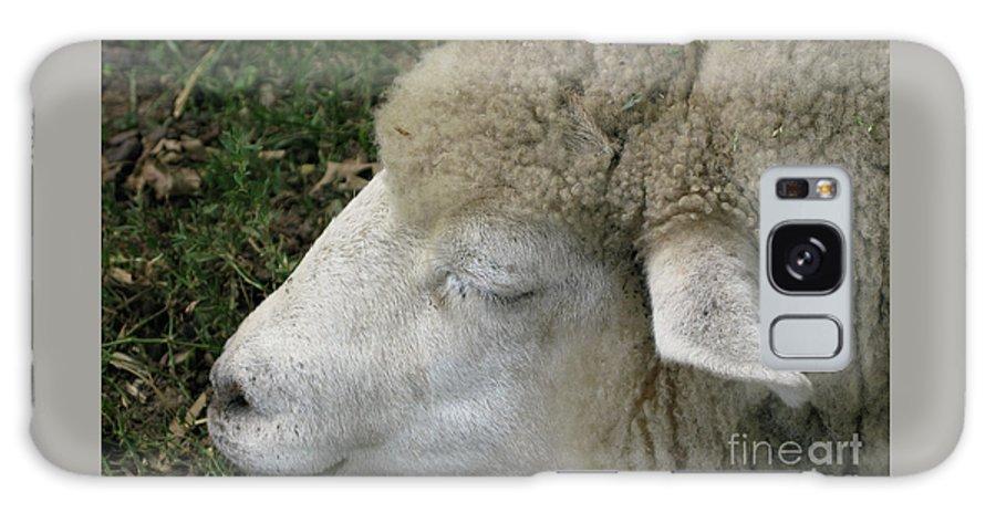 Sheep Galaxy S8 Case featuring the photograph Sheep Sleep by Ann Horn