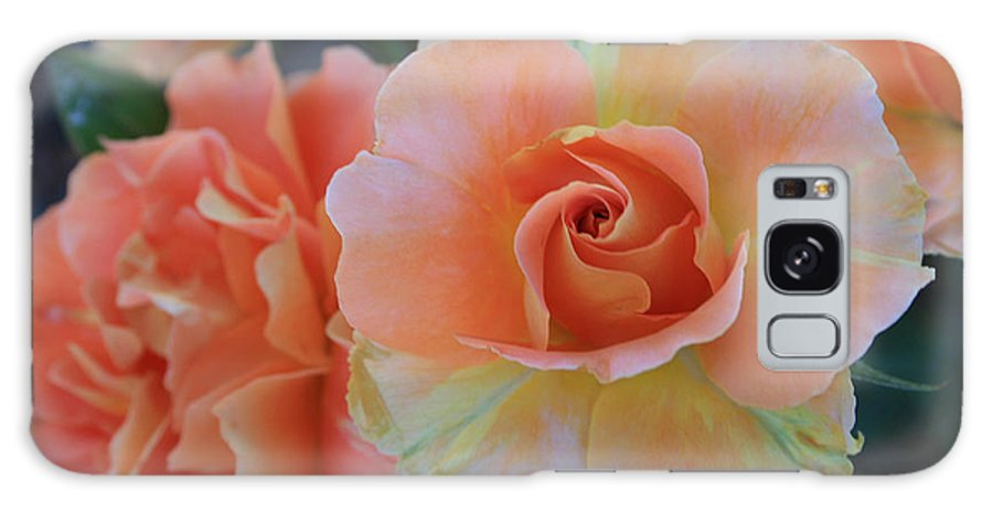 Sherbert Galaxy S8 Case featuring the photograph Sherbert Rose by Marna Edwards Flavell