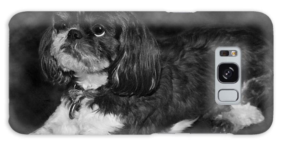 3scape Galaxy S8 Case featuring the painting Shih Tzu by Adam Romanowicz