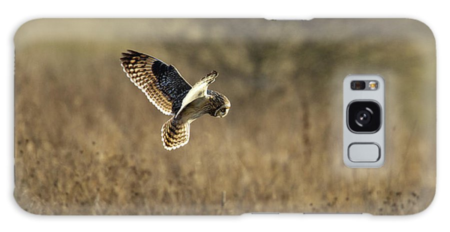 Birds Galaxy S8 Case featuring the photograph Short-eared Owl About To Strike by Bob Kemp