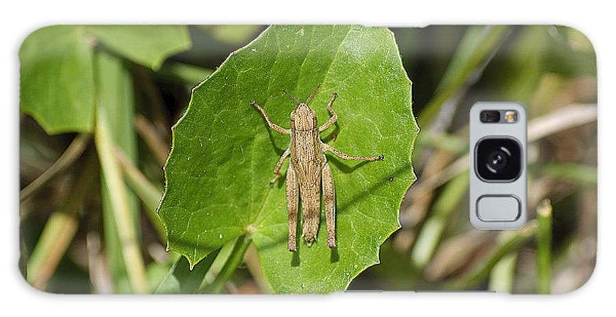 Grasshopper Galaxy S8 Case featuring the photograph Shortwinged Green Grasshopper by Kenneth Albin
