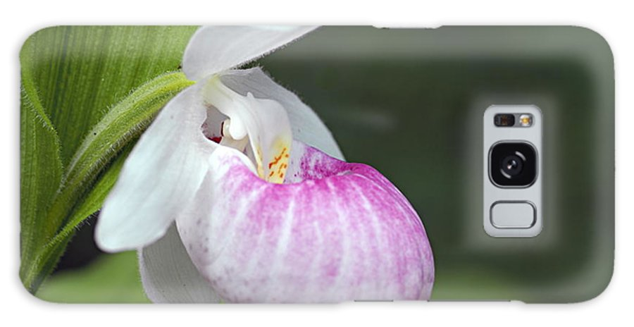 Showy Ladyslipper Galaxy S8 Case featuring the photograph Showy Ladyslipper by Larry Ricker