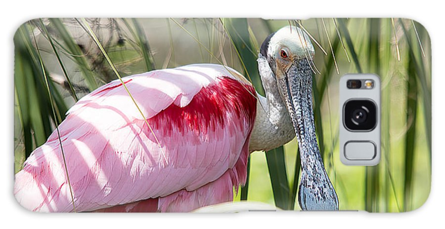 Wildlife Galaxy S8 Case featuring the photograph Shy Guy by Kenneth Albin