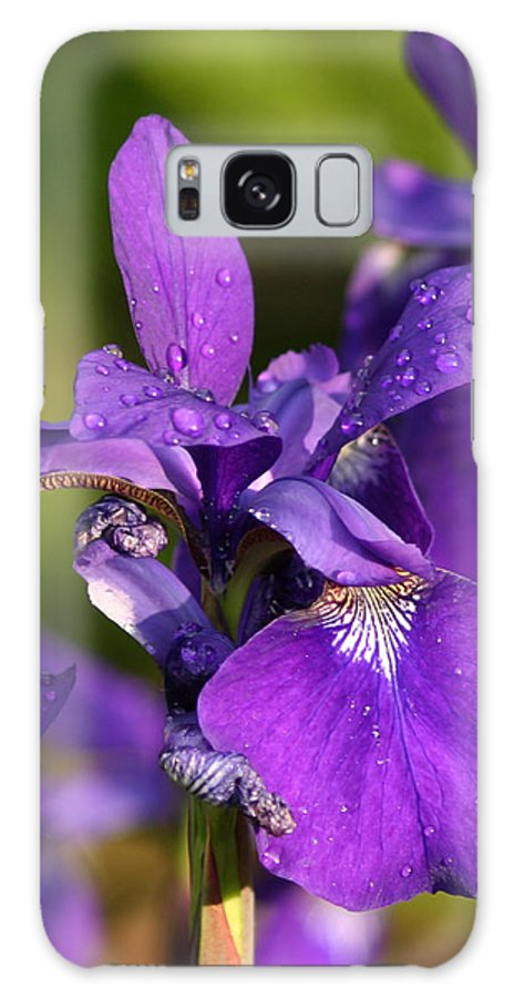 Flower Galaxy S8 Case featuring the photograph Siberian Iris After Rain by Robert E Alter Reflections of Infinity