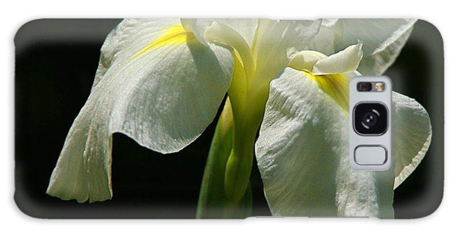 Iris Galaxy S8 Case featuring the photograph Siberian Iris by Byron Varvarigos