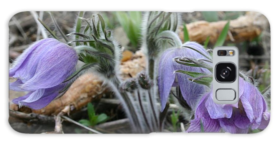 Pasque Flower Galaxy S8 Case featuring the photograph Signs Of Spring by Nelson Strong