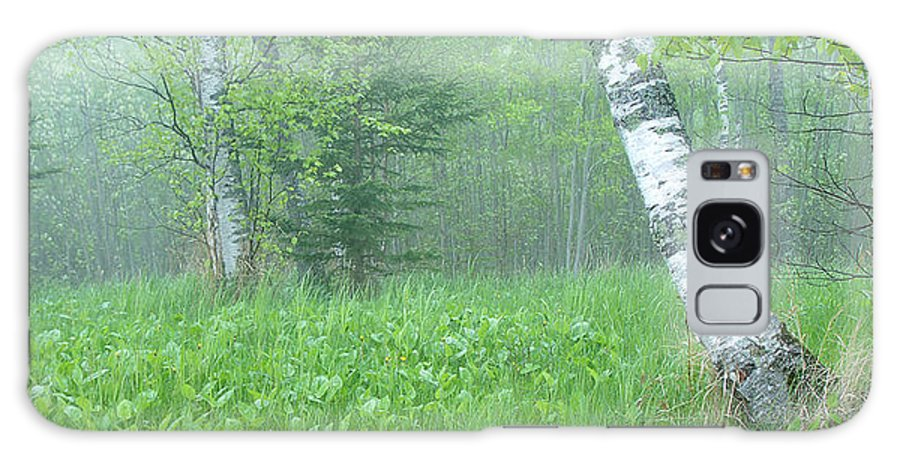 Landscape Galaxy Case featuring the photograph Silent Birch by Bill Morgenstern
