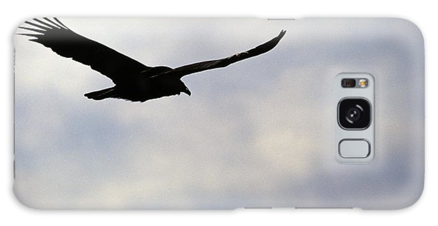 Silhouette Galaxy Case featuring the photograph Silhouette Of A Turkey Vulture by Erin Paul Donovan