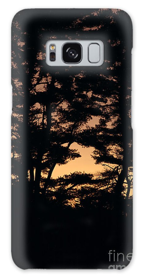 Tree Galaxy Case featuring the photograph Silhouette Of Forest by Erin Paul Donovan