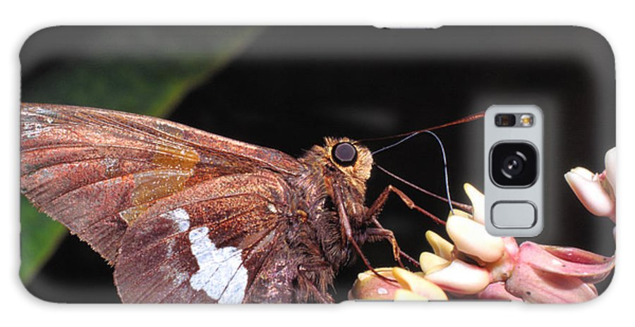 Silver-spotted Skipper Galaxy S8 Case featuring the photograph Silver-spotted Skipper by Thomas R Fletcher