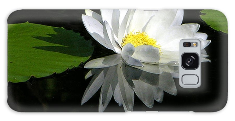 Water Lily Galaxy Case featuring the photograph Simply White on Black by John Lautermilch
