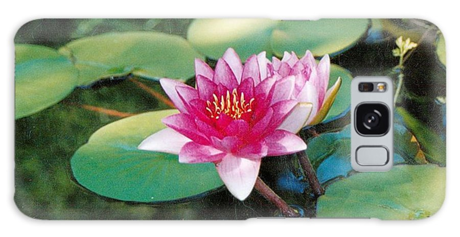 Flower Galaxy Case featuring the photograph Single Lilly by Crystal Webb