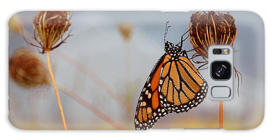Monarch Butterfly Galaxy S8 Case featuring the photograph Sleeping Beauty by Linda Murphy