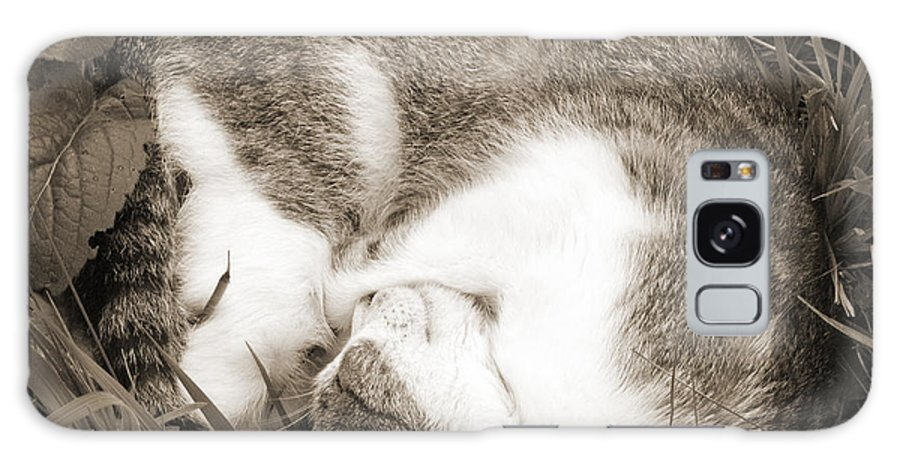 Pets Galaxy Case featuring the photograph Sleeping by Daniel Csoka