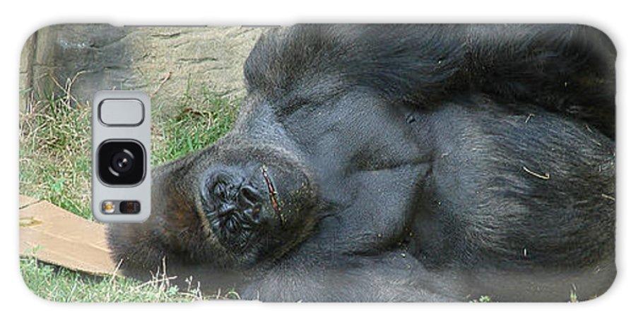 Ape Black Sleeping Galaxy Case featuring the photograph Sleeping Gorrilla by Luciana Seymour