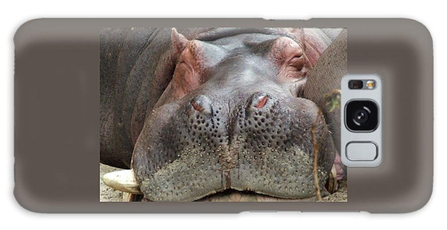 Hippopotamus Galaxy S8 Case featuring the photograph Sleeping Hippo by Tiffany Vest