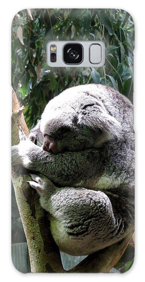 Koala Galaxy S8 Case featuring the photograph Sleeping Koala by George Jones