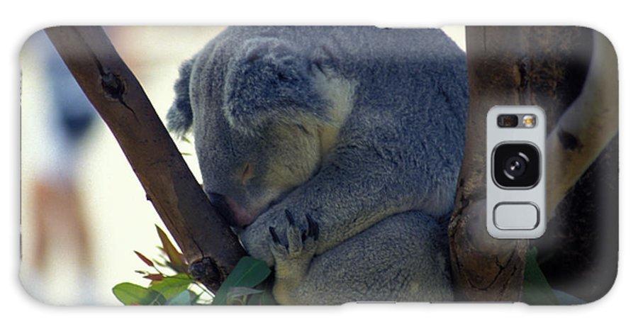 Sleep Galaxy Case featuring the photograph Sleepy Koala Bear by Carl Purcell