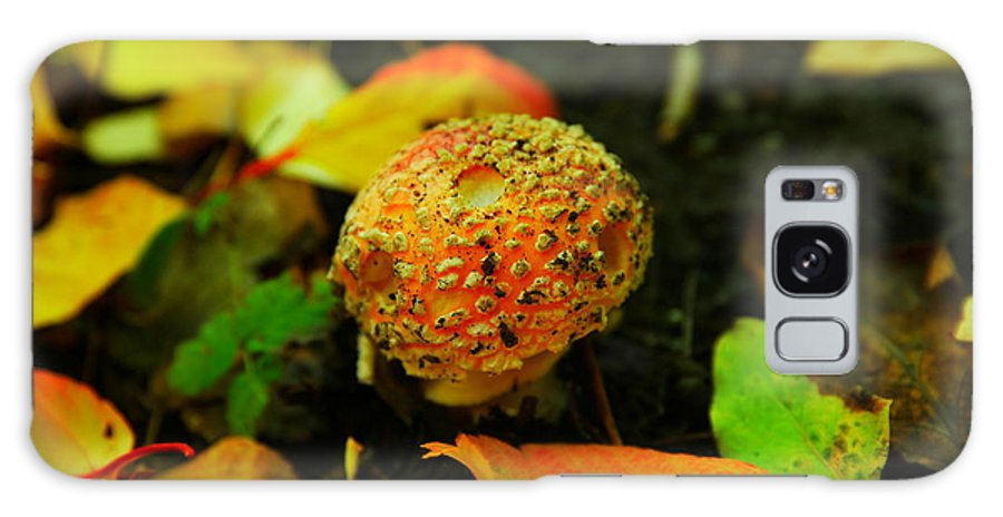 Mushroom Galaxy S8 Case featuring the photograph Small Mushroom In Autumn by Jeff Swan