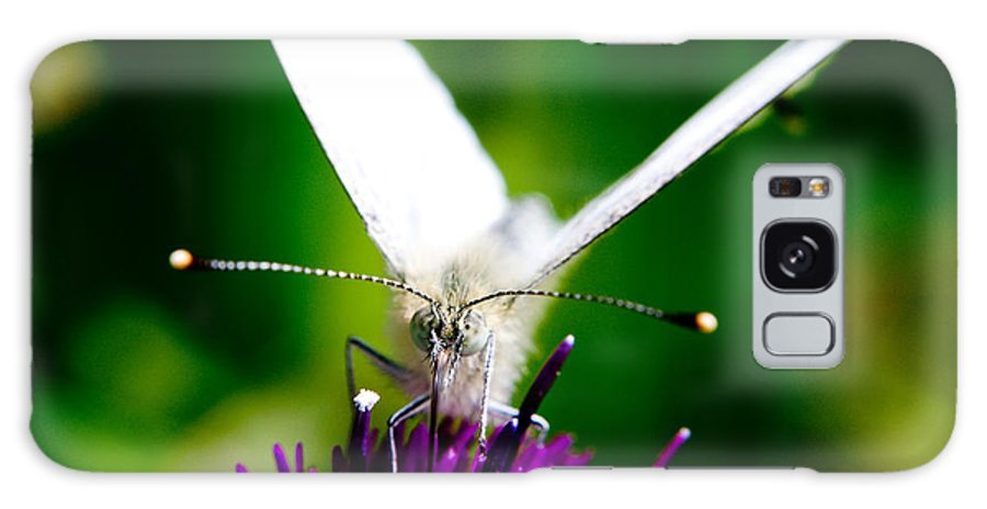 Nature Scenes Galaxy S8 Case featuring the photograph Small White Cabbage Butterfly Pieris Rapae by Chris Smith