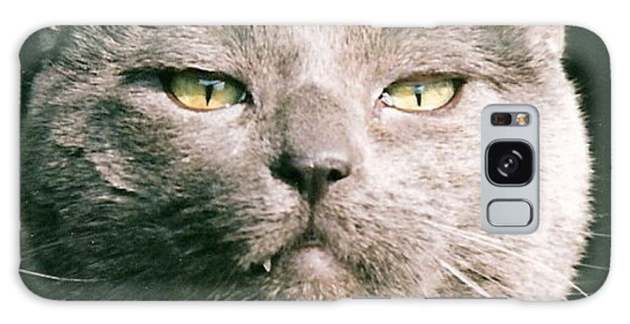 Cat Galaxy S8 Case featuring the greeting card Smokey by Lauri Novak