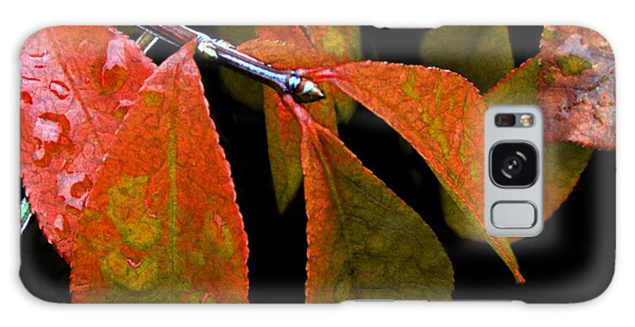 Autumn Galaxy S8 Case featuring the digital art Snippet Of Fall by RC DeWinter