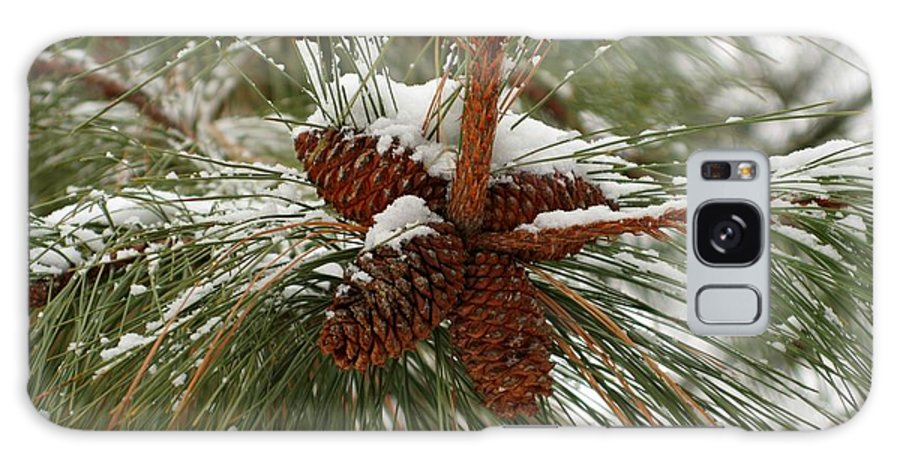 Pine Galaxy S8 Case featuring the photograph Snow In The Pine by Idaho Scenic Images Linda Lantzy