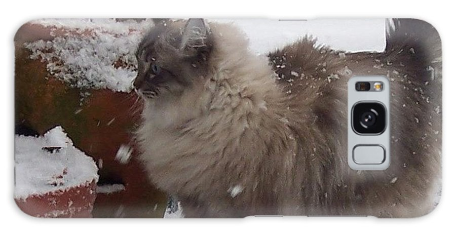 Cats Galaxy S8 Case featuring the photograph Snow Kitty by Debbi Granruth