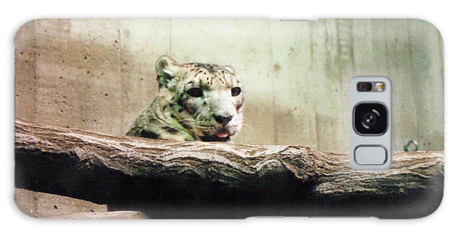 White Tiger Galaxy S8 Case featuring the photograph Snow Leopard by Crystal Webb