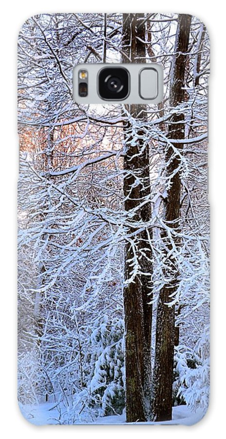 Snow Galaxy S8 Case featuring the photograph Snow Maple Morning by Dave Martsolf
