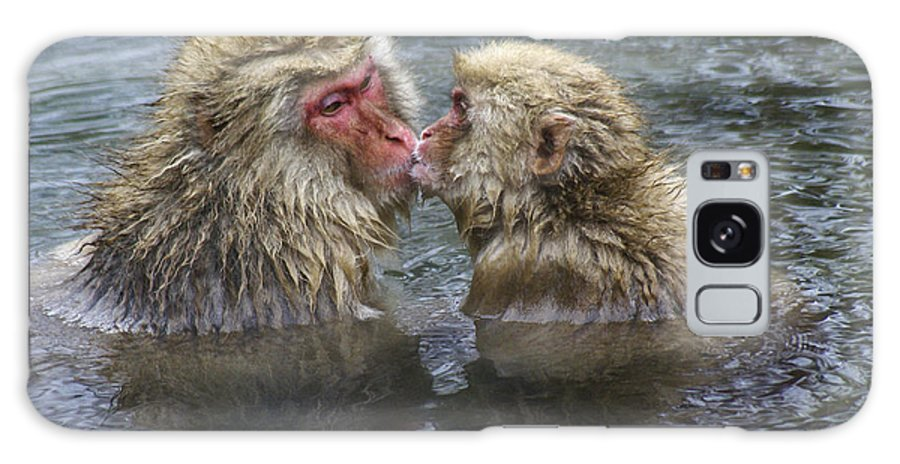 Snow Monkey Galaxy S8 Case featuring the photograph Snow Monkey Kisses by Michele Burgess