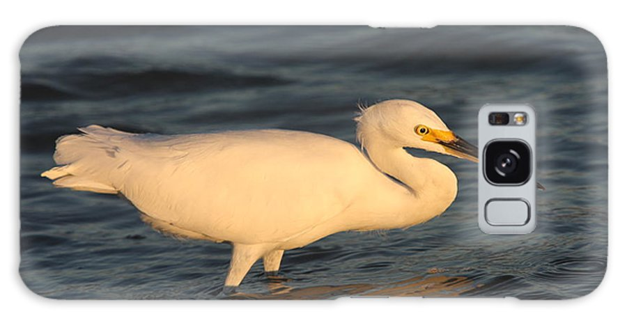 Egret Galaxy S8 Case featuring the photograph Snowy Egret By Sunset by Christiane Schulze Art And Photography