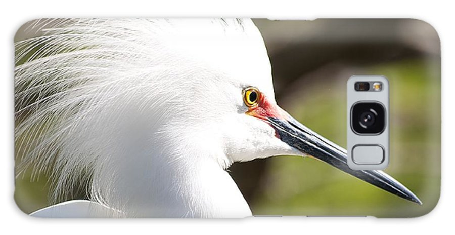 Egret Galaxy S8 Case featuring the photograph Snowy Egret Closeup by Kenneth Albin
