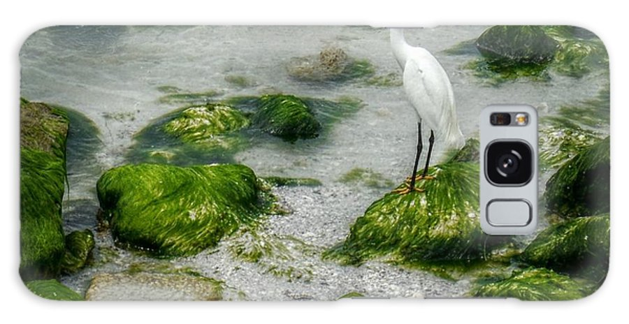 Egret Galaxy S8 Case featuring the photograph Snowy Egret On Mossy Rocks by Valerie Reeves
