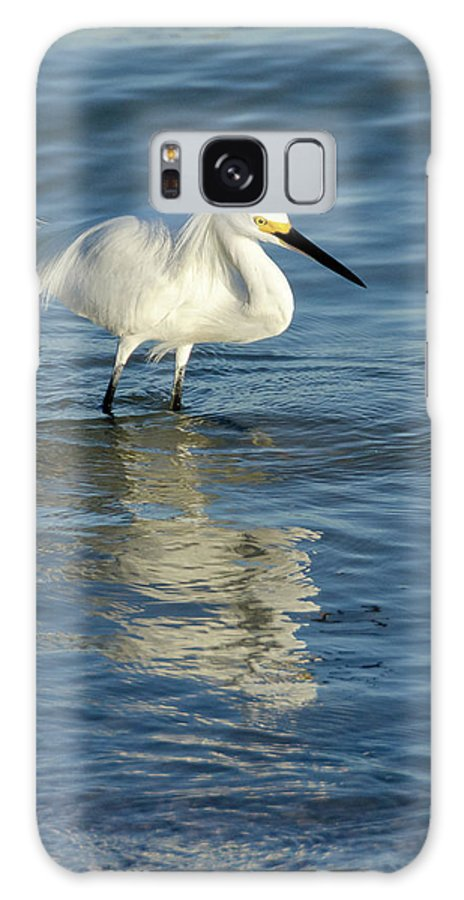 Sand Key Galaxy S8 Case featuring the photograph Snowy Egret On The Hunt II by Kim Wilder Hinson
