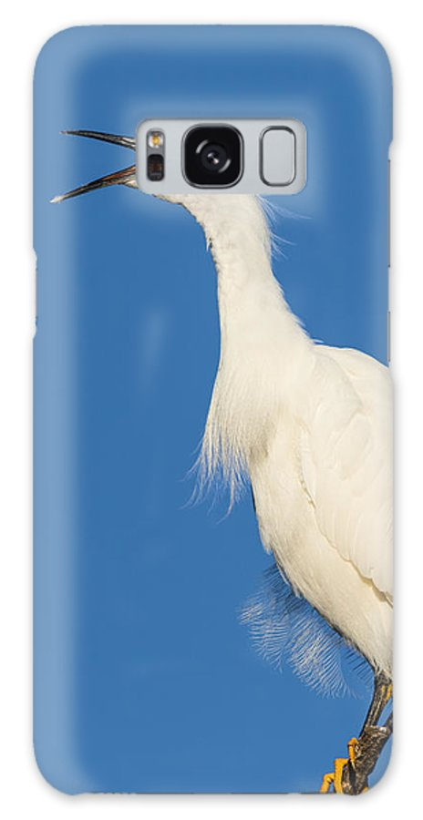 Snowy Egret Galaxy S8 Case featuring the photograph Snowy Egret With Attitude by Kathleen Bishop