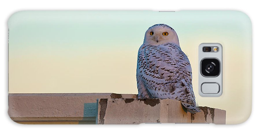 Snowy Owl Galaxy S8 Case featuring the photograph Snowy Owl by Randall Branham