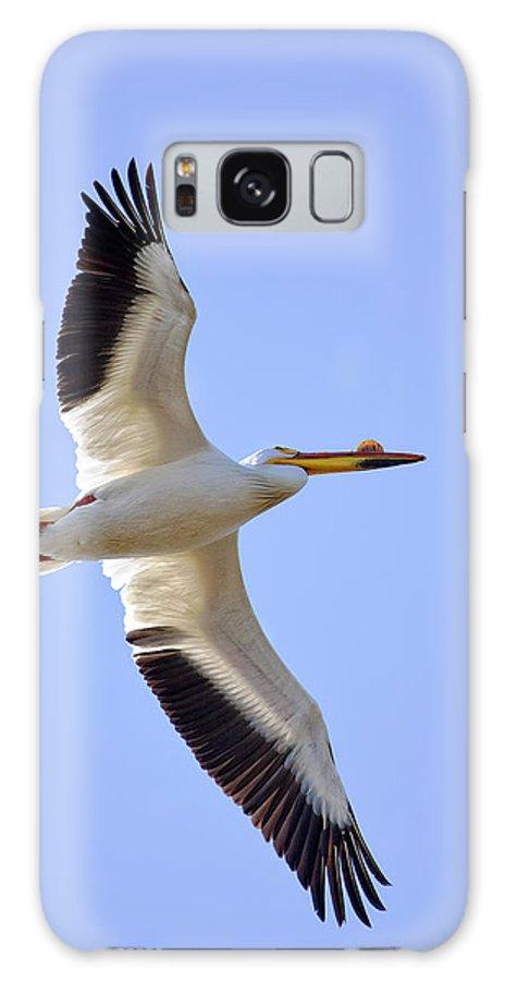 American White Pelican Galaxy Case featuring the photograph Soaring American White Pelican by Al Mueller