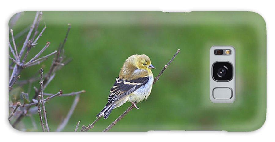 Bird Galaxy S8 Case featuring the photograph Soft And Fluffy by Deborah Benoit